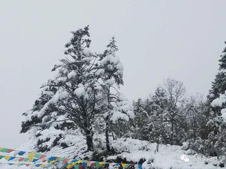 冬天清华大学风景图片